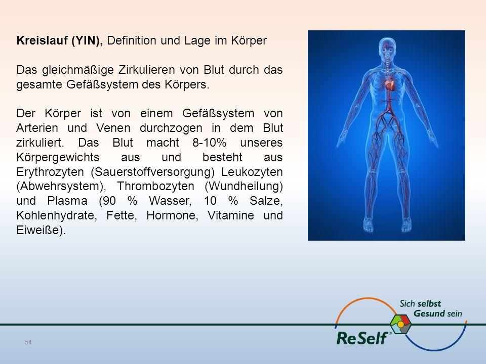 Kreislauf (YIN), Definition und Lage im Körper