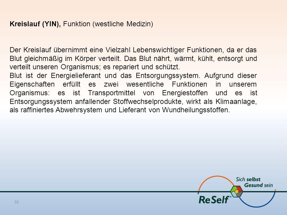 Kreislauf (YIN), Funktion (westliche Medizin)
