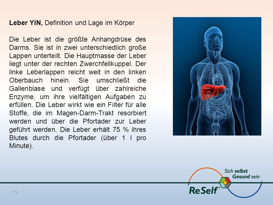 Leber YIN, Definition und Lage im Körper