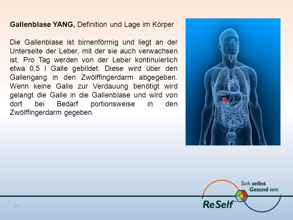 Gallenblase YANG, Definition und Lage im Körper
