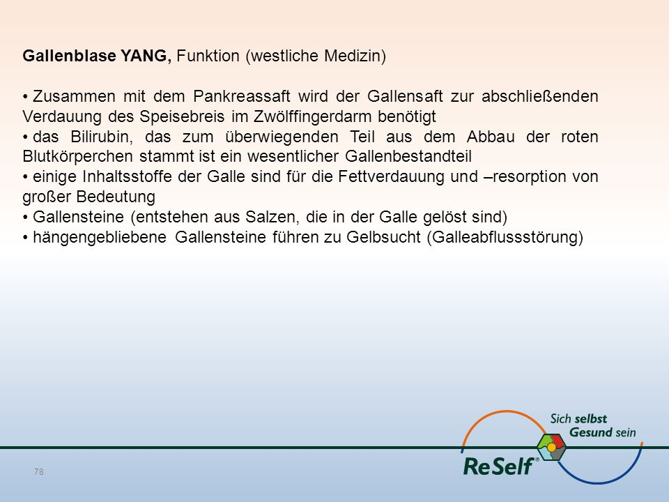 Gallenblase YANG, Funktion (westliche Medizin)