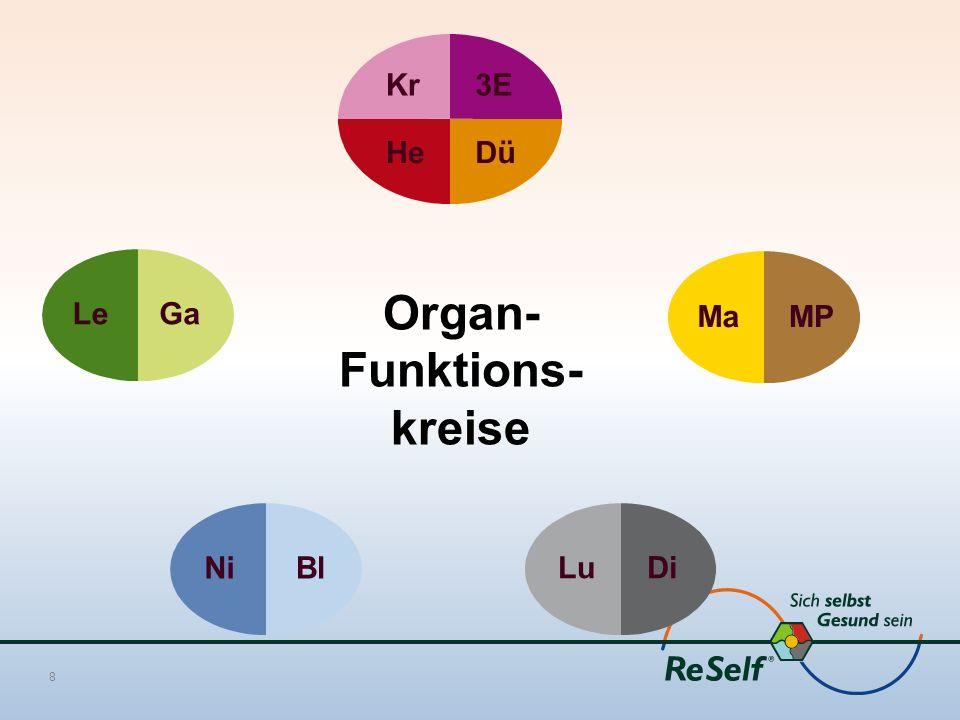 Organ- Funktions- kreise