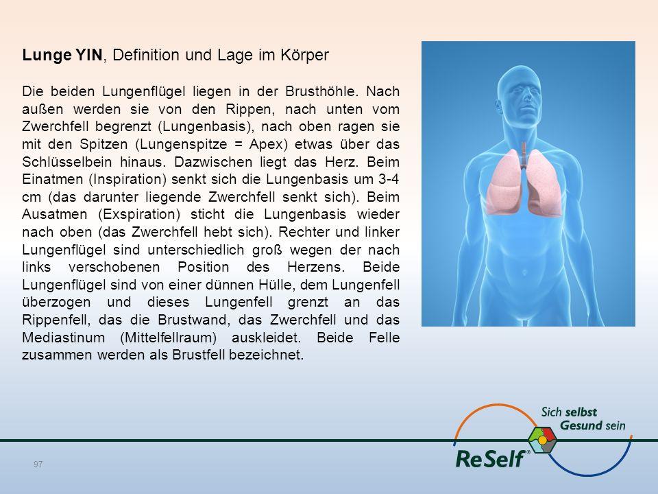 Lunge YIN, Definition und Lage im Körper