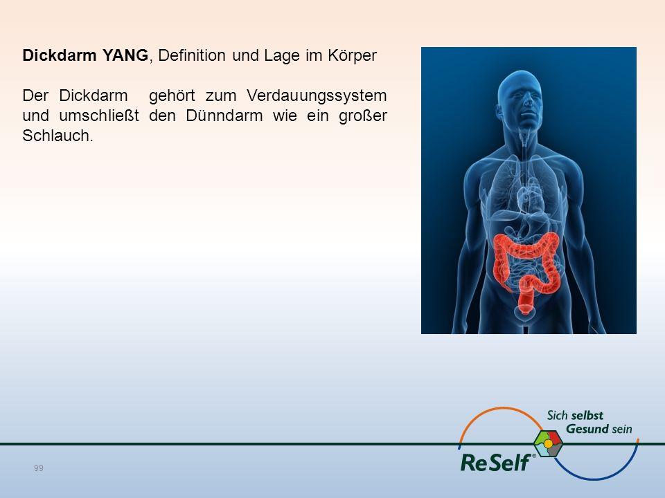 Dickdarm YANG, Definition und Lage im Körper