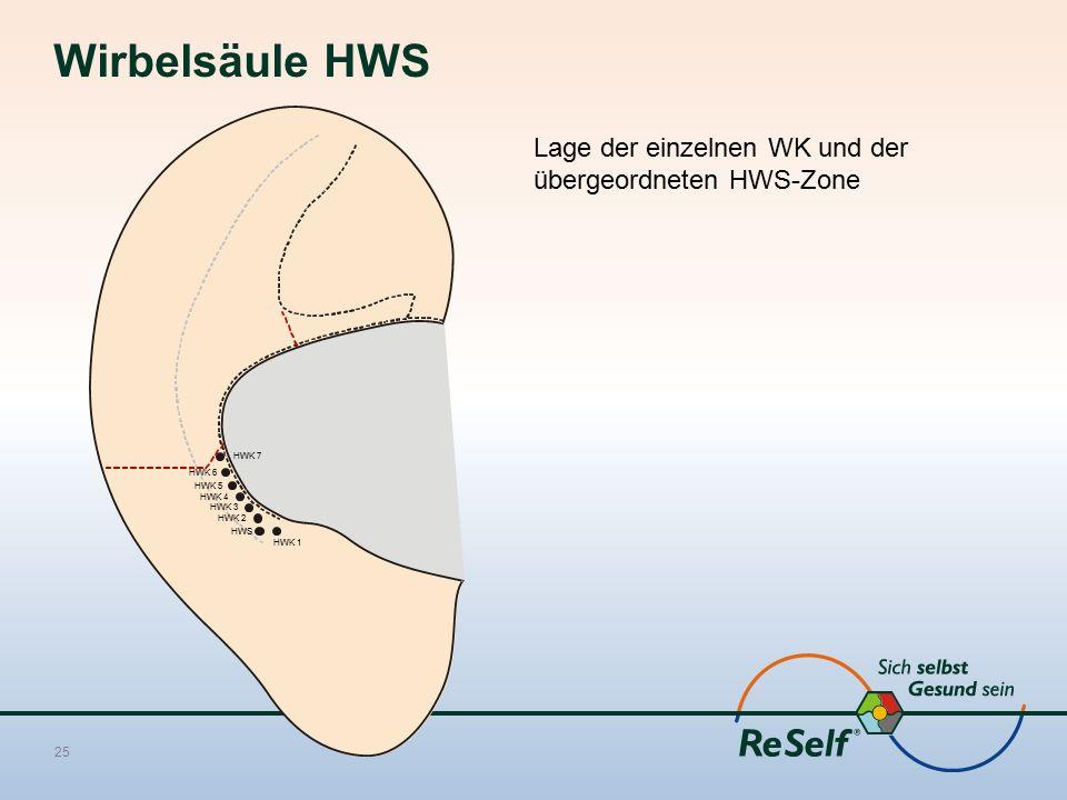 Wirbelsäule HWS Lage der einzelnen WK und der übergeordneten HWS-Zone