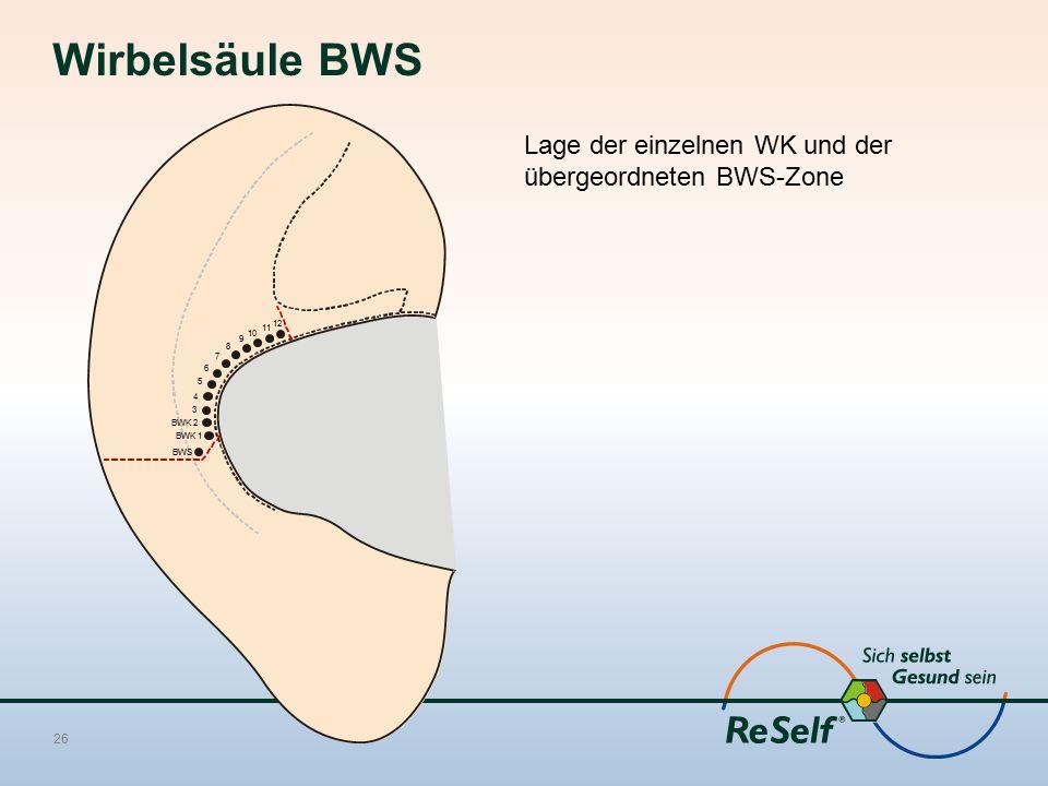 Wirbelsäule BWS Lage der einzelnen WK und der übergeordneten BWS-Zone