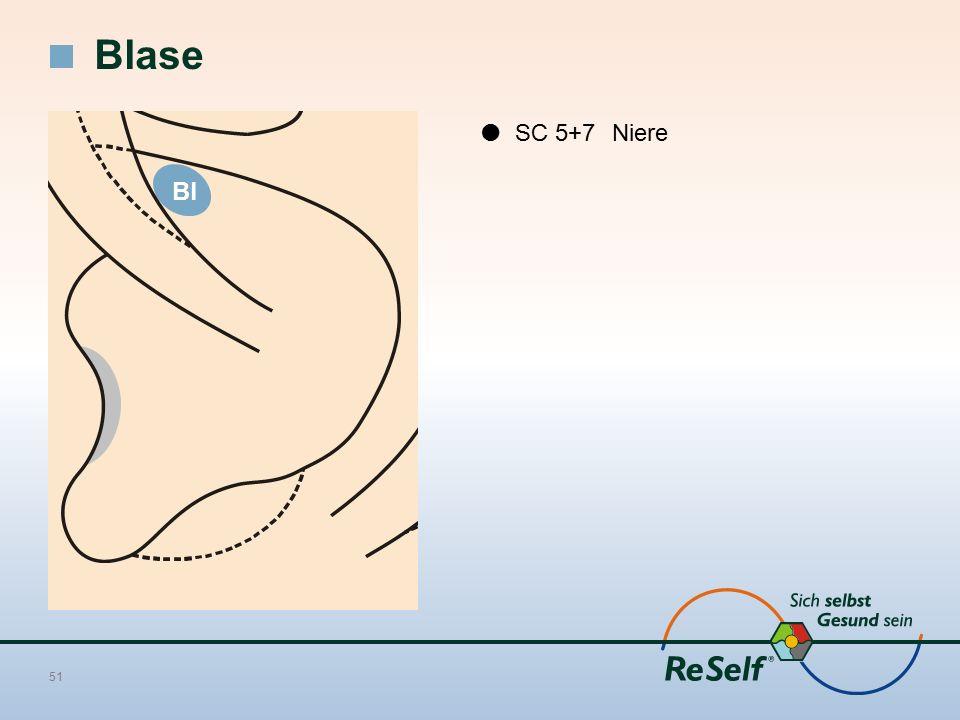 Blase  SC 5+7 Niere Bl