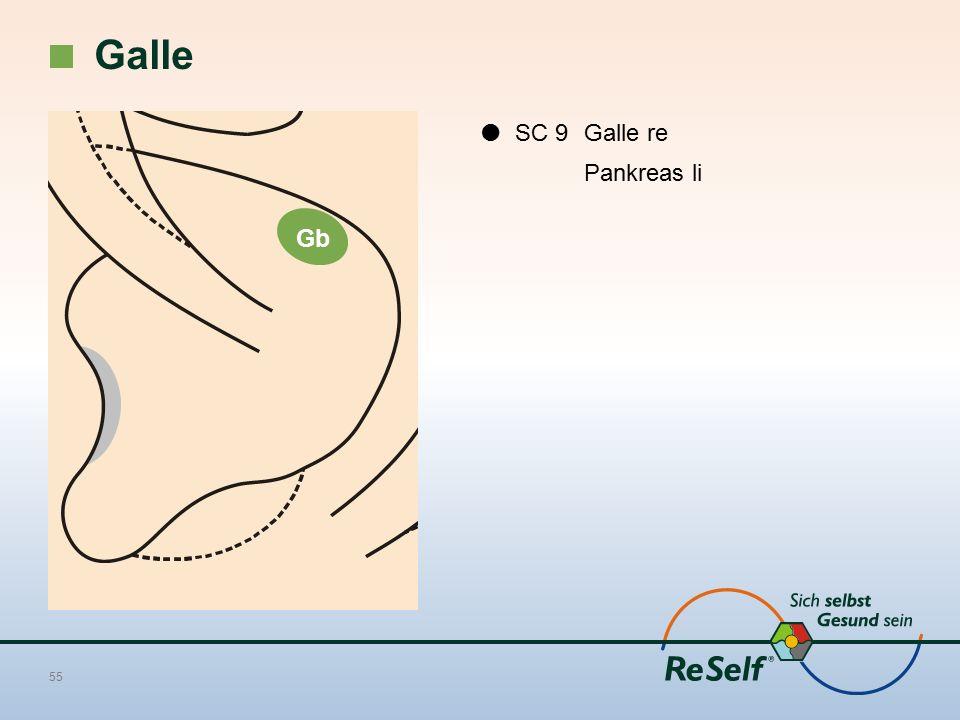 Galle  SC 9 Galle re Pankreas li Gb