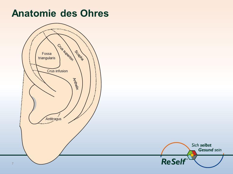 Anatomie des Ohres Crus superion Fossa Scapha triangularis