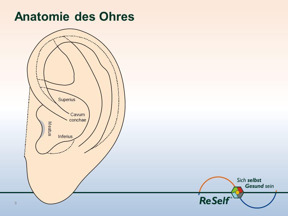 Anatomie des Ohres Superius Cavum conchae Meatus Inferius