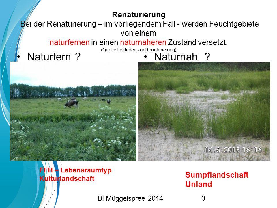 Renaturierung Bei der Renaturierung – im vorliegendem Fall - werden Feuchtgebiete von einem naturfernen in einen naturnäheren Zustand versetzt. (Quelle Leitfaden zur Renaturierung)