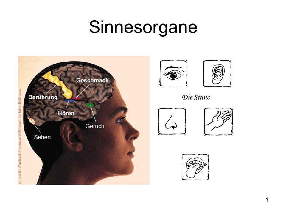 Sinnesorgane