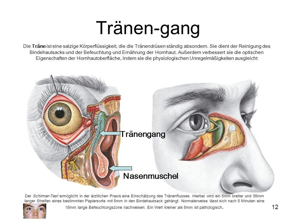 Tränen-gang Tränengang Nasenmuschel