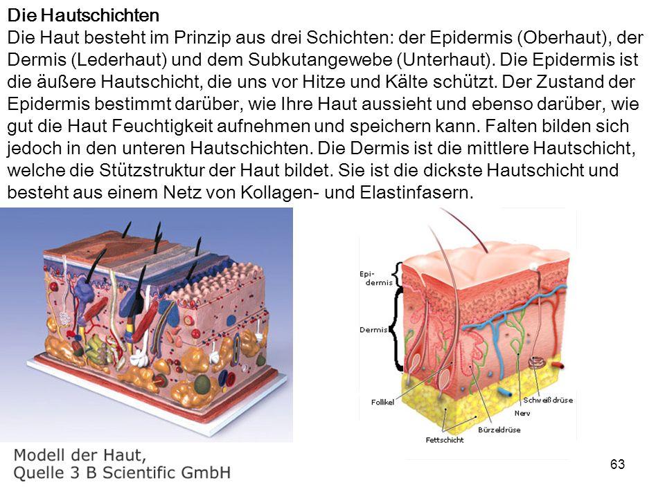 Die Hautschichten Die Haut besteht im Prinzip aus drei Schichten: der Epidermis (Oberhaut), der Dermis (Lederhaut) und dem Subkutangewebe (Unterhaut).