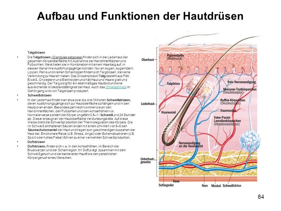 Aufbau und Funktionen der Hautdrüsen