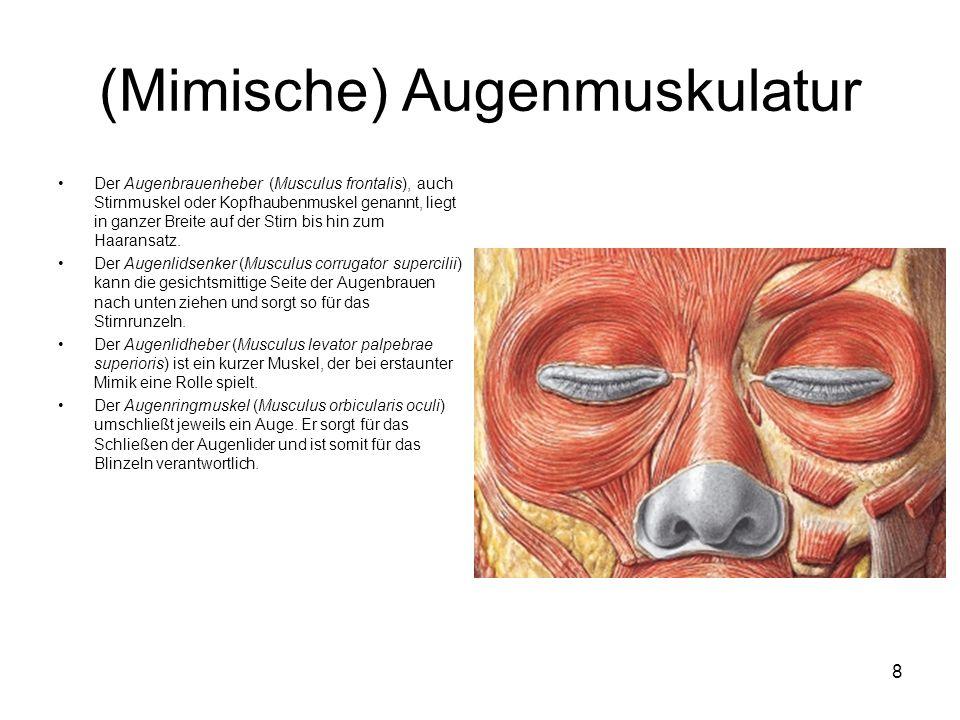 (Mimische) Augenmuskulatur