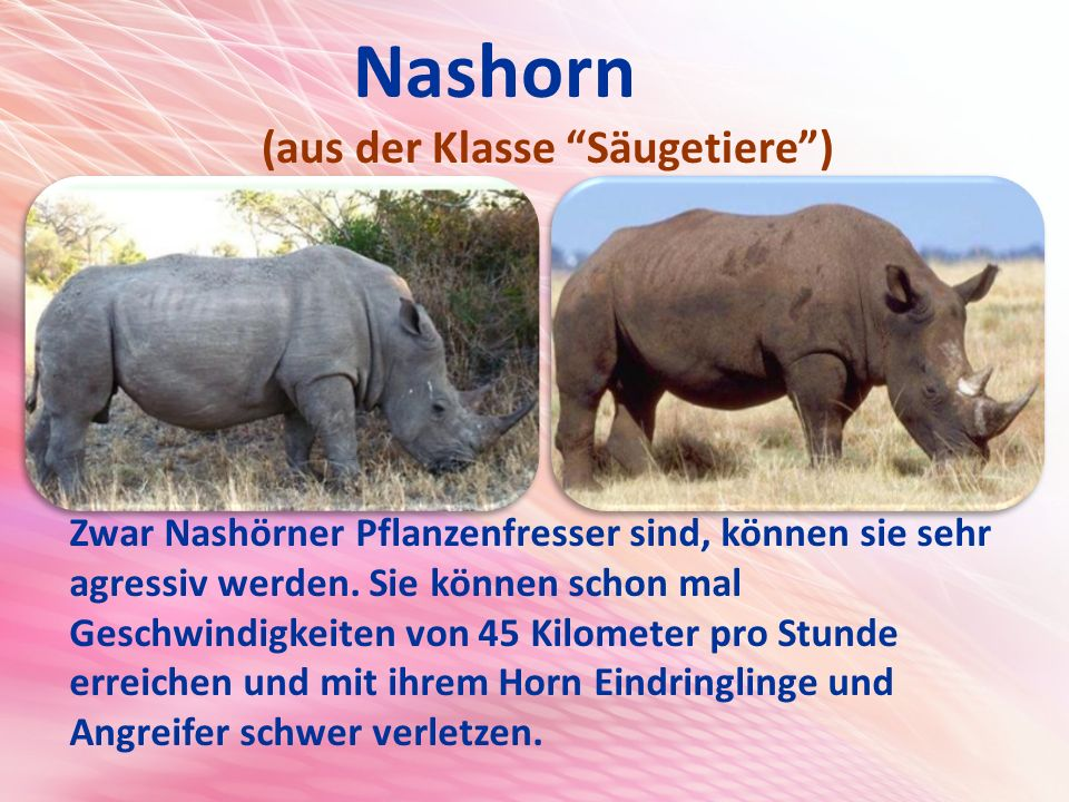 Nashorn (aus der Klasse Säugetiere )