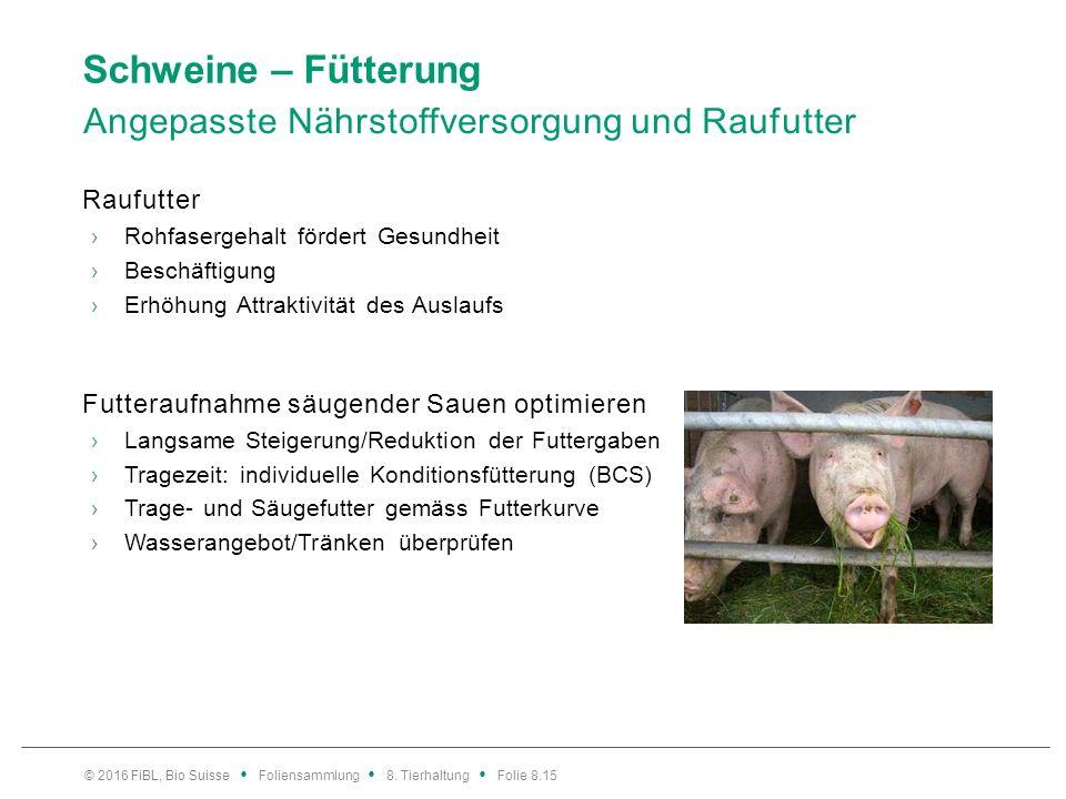 Schweine – Fütterung Ferkelfütterung