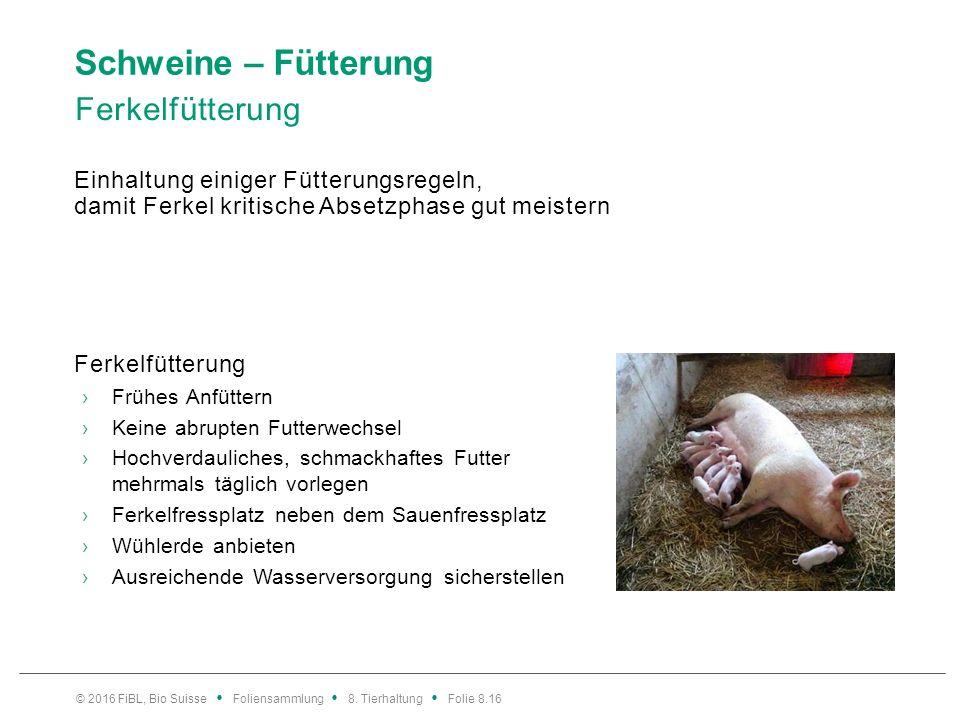 Schweine – Fütterung Absetzen – empfindliche Ernährungs- /Immunsituation. Stressoren. Verlust der Mutter, Veränderung der Haltungsumwelt.