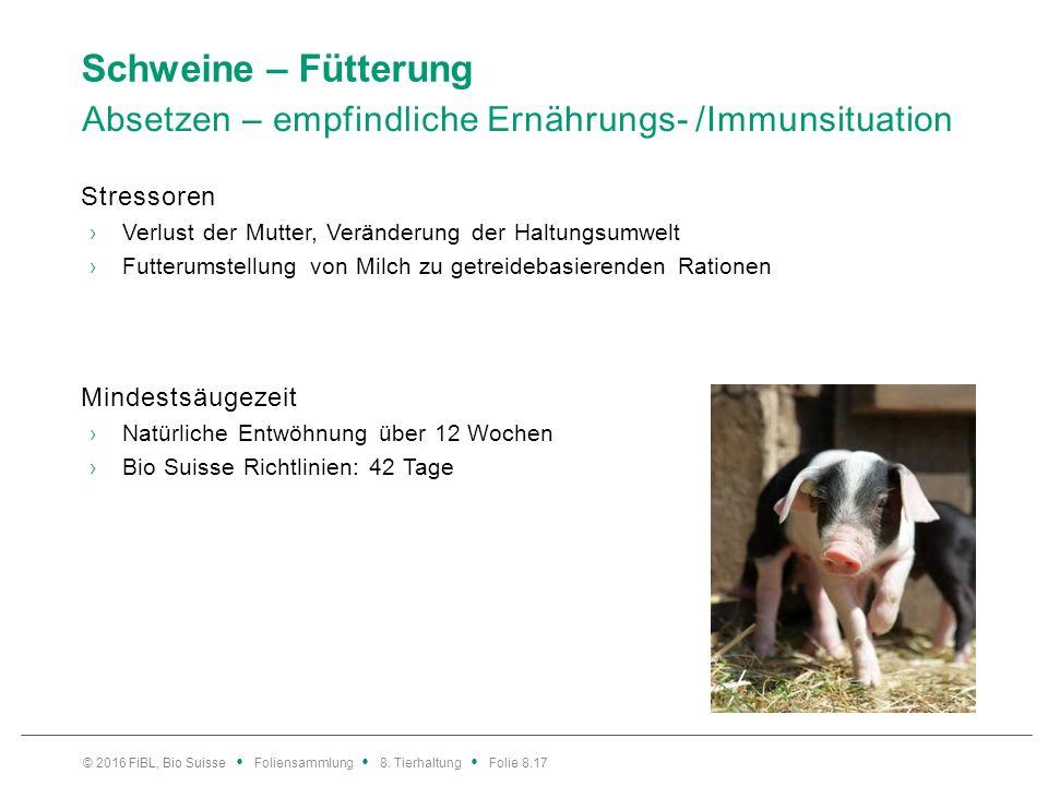 Schweine – Gesundheit Hygiene – Vorbeugung ist das A und O Eckpfeiler