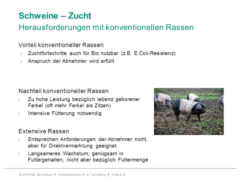 Schweine – Projekte für die Praxis im Biobetrieb