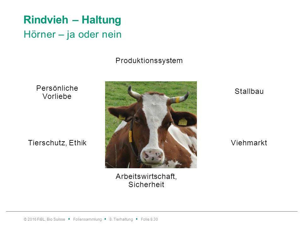 Rindvieh – Haltung Laufstallhaltung behornter Kühe