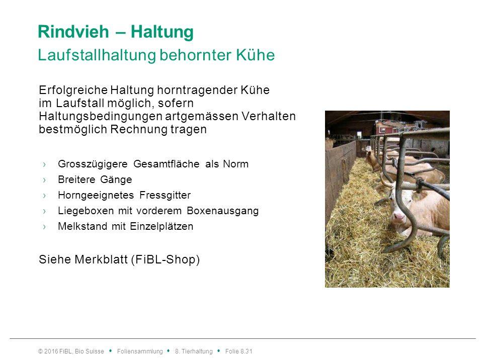Rindvieh – Fütterung Bedürfnissen der Wiederkäuer gerecht werden