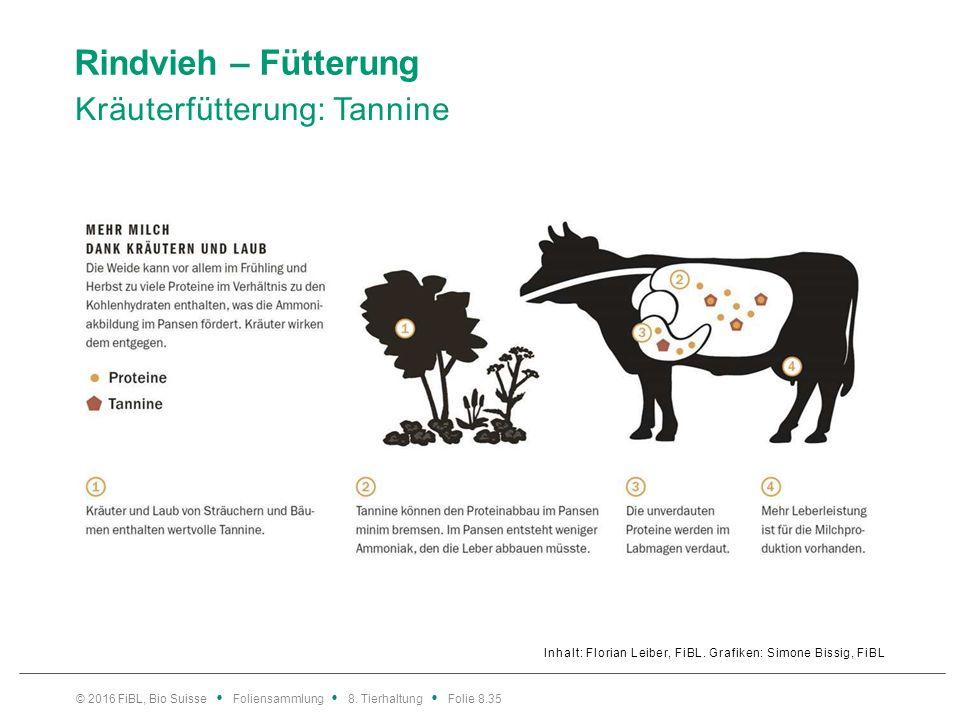 Rindvieh – Fütterung Phasengerechte Milchviehfütterung