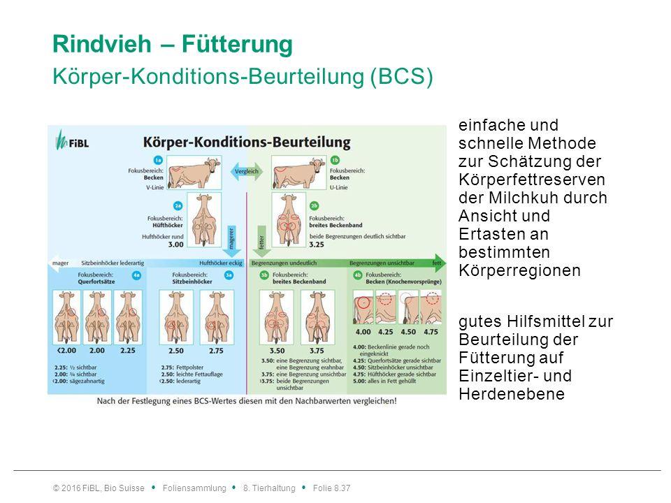 38 Rindvieh – Fütterung BCS – Beurteilung in der Praxis