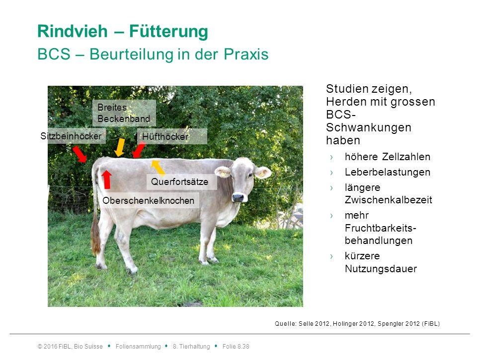 Rindvieh – Fütterung BCS – Beurteilung in der Praxis