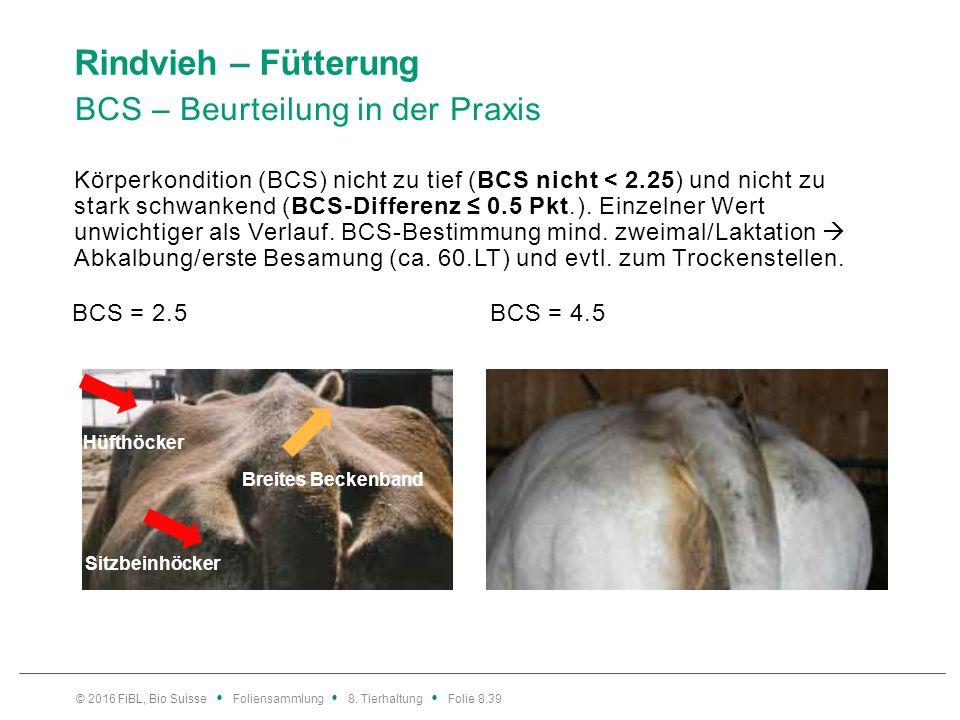 Rindvieh – Fütterung Persistenz – kontinuierlich mittlere Milchmengen