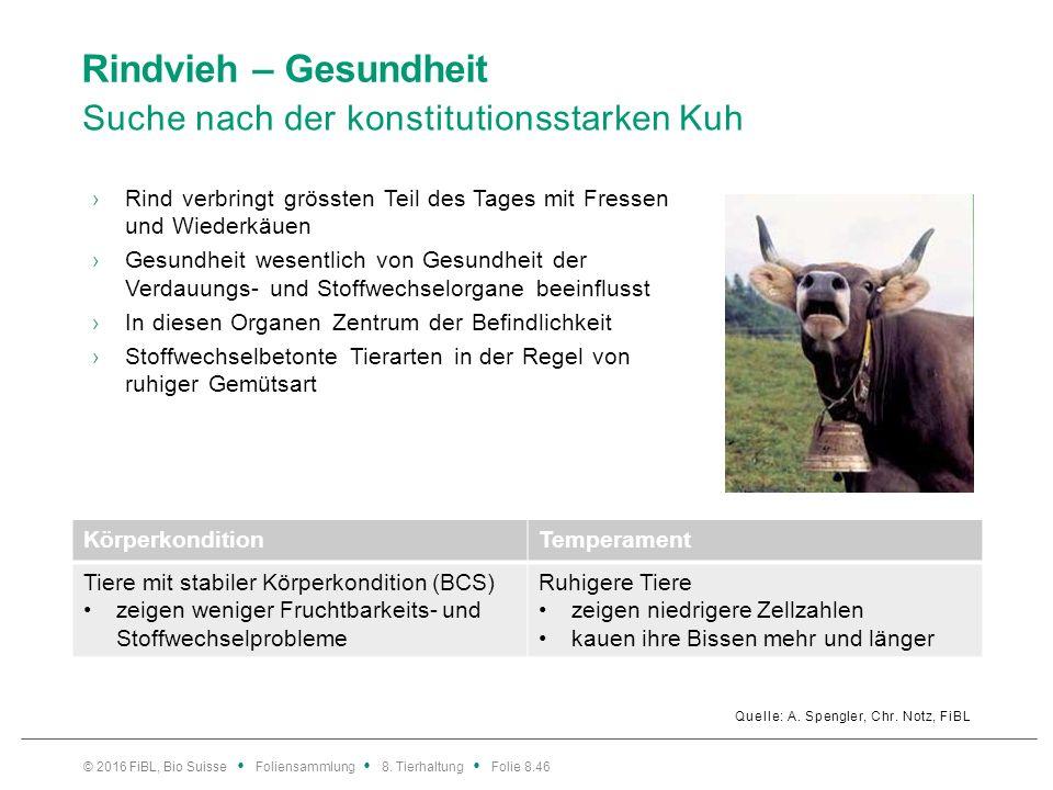 Rindvieh – Gesundheit Vermeidung von Stress