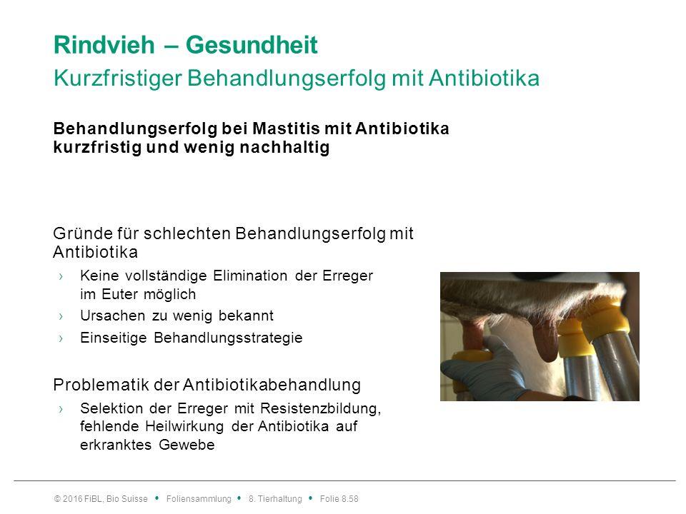 Rindvieh – Gesundheit Antibiotikaminimiertes Tiergesundheitsmanagement
