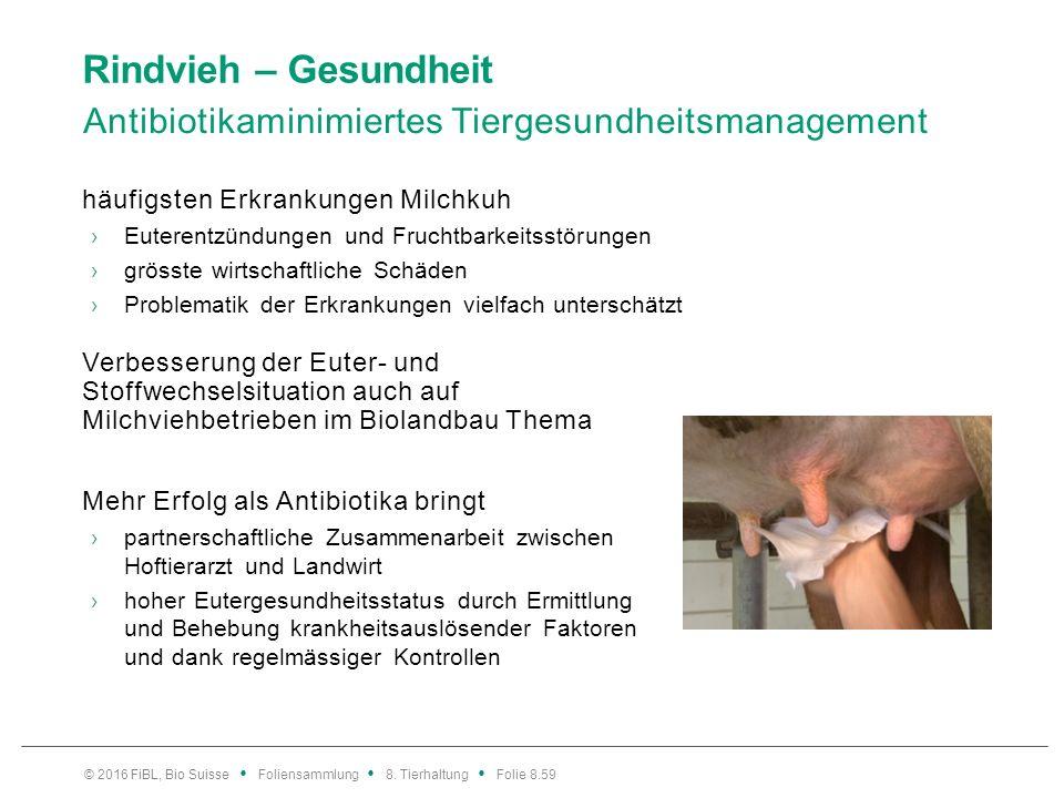 Rindvieh – Gesundheit Eutergesundheit – ein Managementleitfaden
