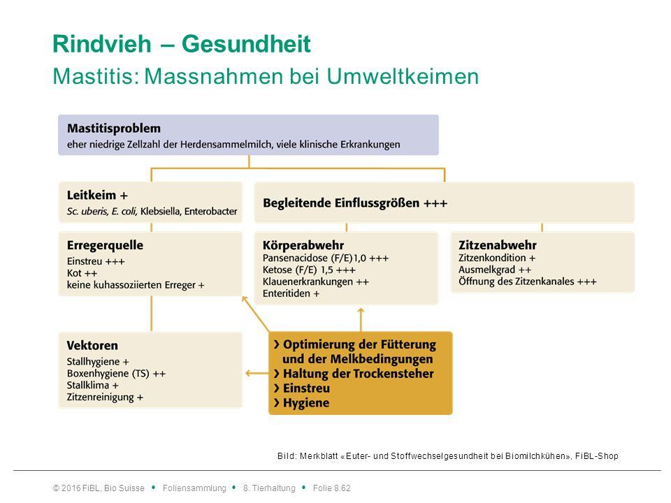 Rindvieh – Gesundheit Mastitis: Massnahmen bei kuhassoziierten Keimen