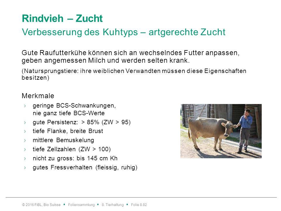 Rindvieh – Zucht Auswahl von KB-Stieren