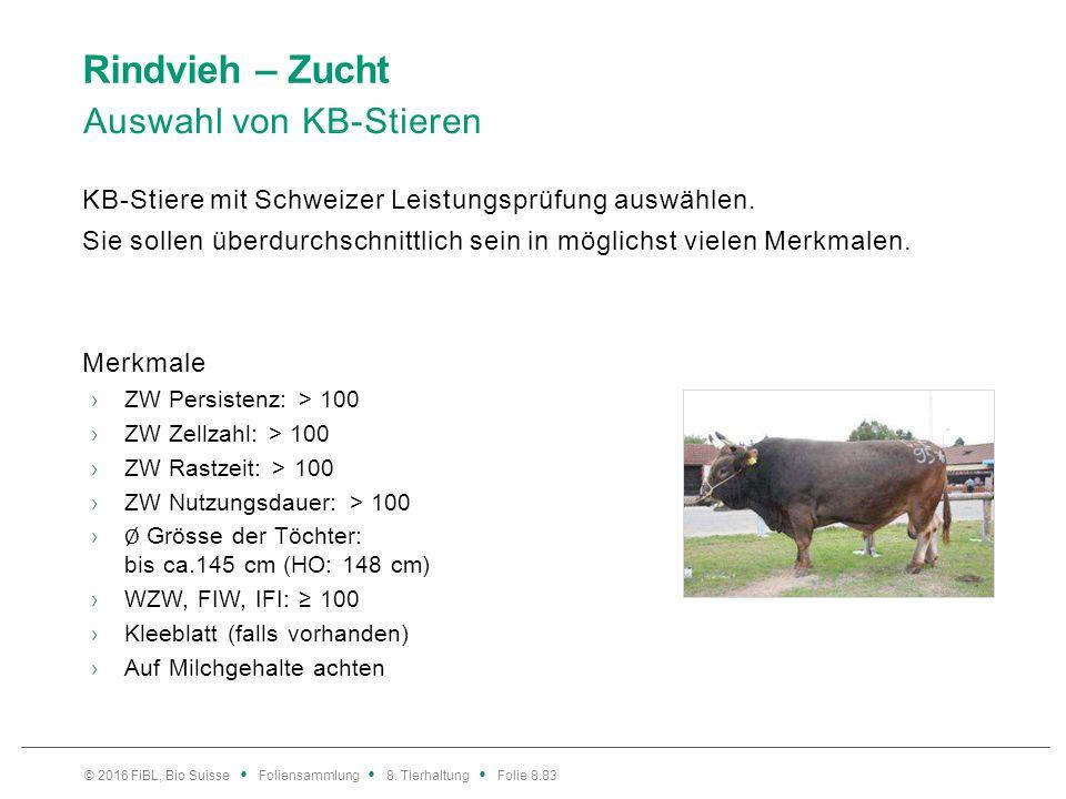 Rindvieh – Zucht Vergleich: BV- und OB-Kühe und deren Kreuzungen