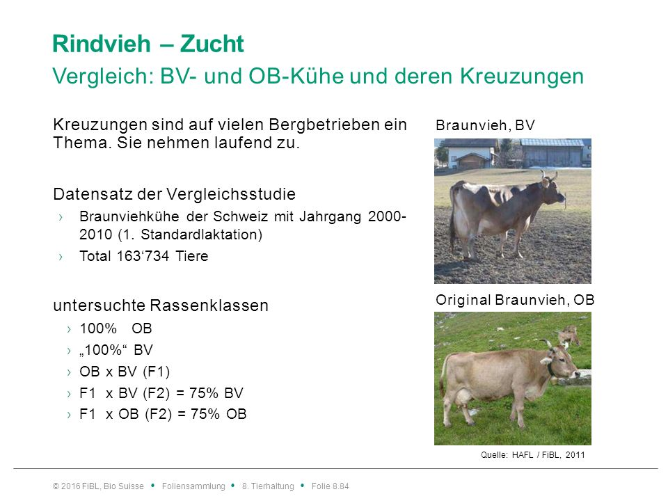 Rindvieh – Zucht Vergleich BV- und OB-Kühe und deren Kreuzungen: Einfluss Rassenklassen auf Milchleistung.