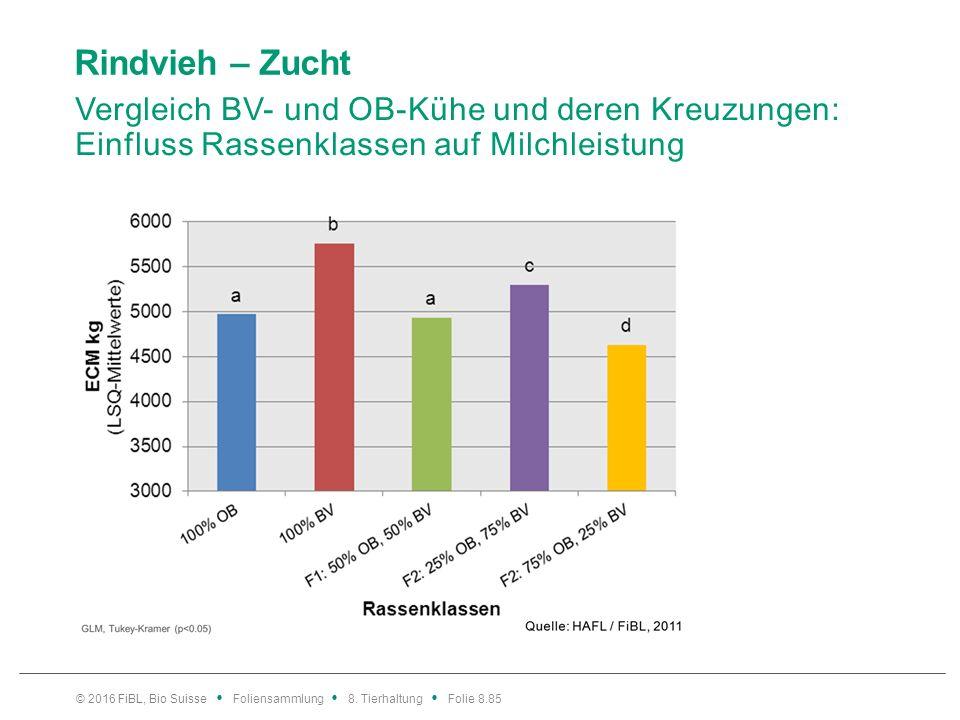 Rindvieh – Zucht Vergleich BV- und OB-Kühe und deren Kreuzungen: Einfluss Rassenklassen auf Eiweissgehalt.