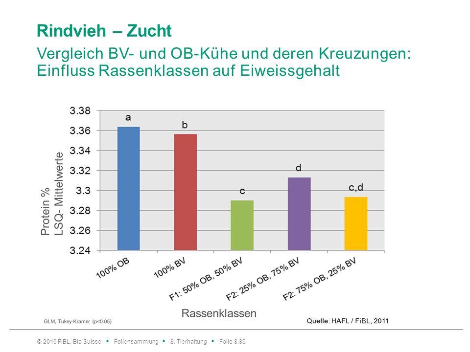 Rindvieh – Zucht Vergleich BV- und OB-Kühe und deren Kreuzungen: Einfluss Rassenklassen und Regionen auf Persistenz.
