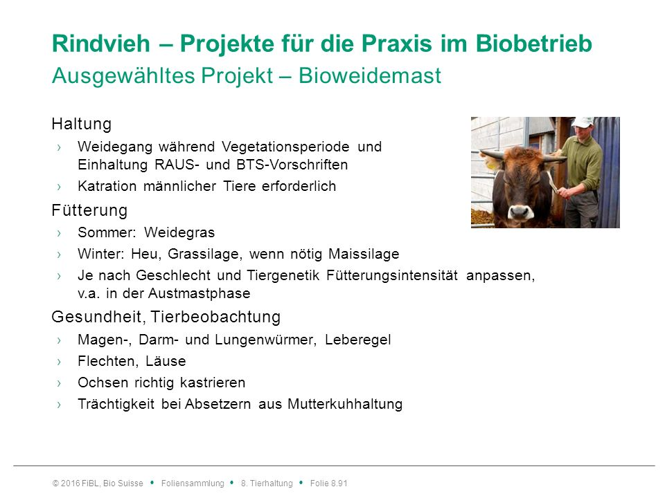 Rindvieh – Projekte für die Praxis im Biobetrieb