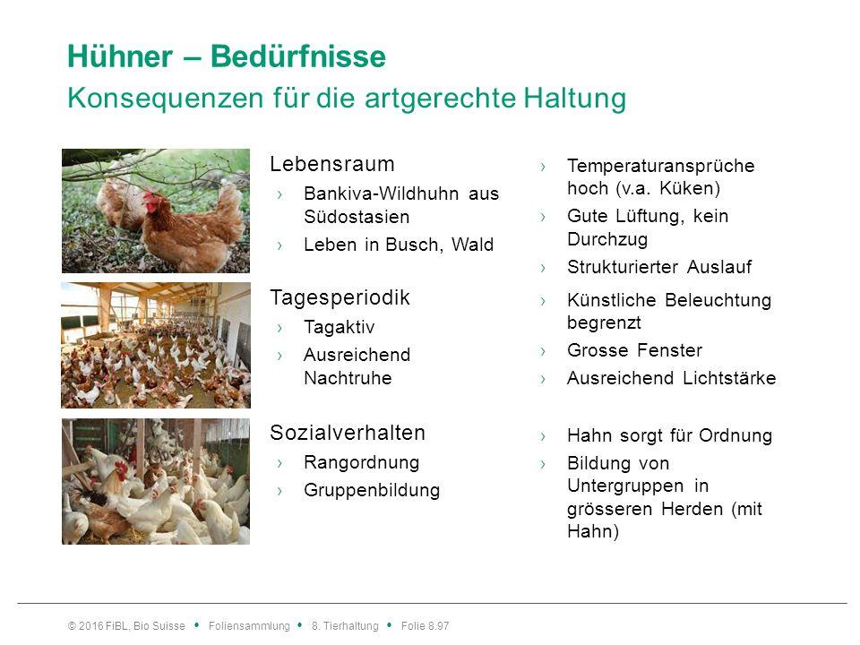 Hühner – Bedürfnisse Konsequenzen für die artgerechte Haltung