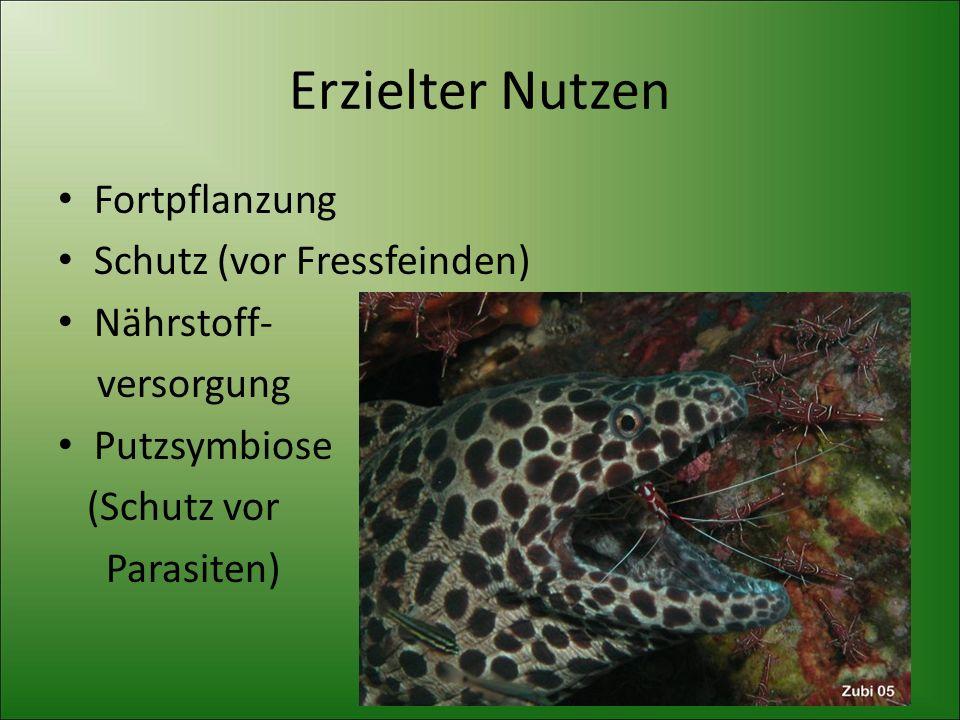 Erzielter Nutzen Fortpflanzung Schutz (vor Fressfeinden) Nährstoff-