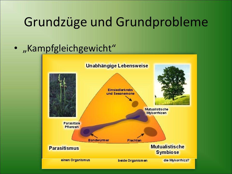 Grundzüge und Grundprobleme
