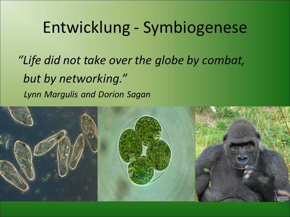 Entwicklung - Symbiogenese