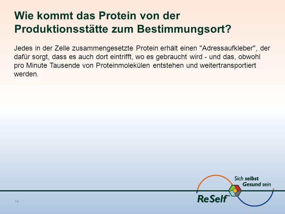 Wie kommt das Protein von der Produktionsstätte zum Bestimmungsort
