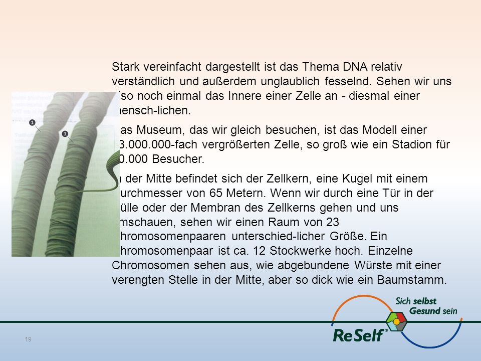 Stark vereinfacht dargestellt ist das Thema DNA relativ verständlich und außerdem unglaublich fesselnd.