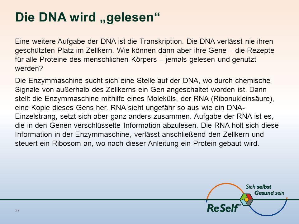 """Die DNA wird """"gelesen"""