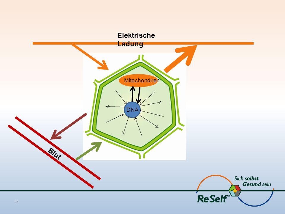 Elektrische Ladung Mitochondrien DNA Blut