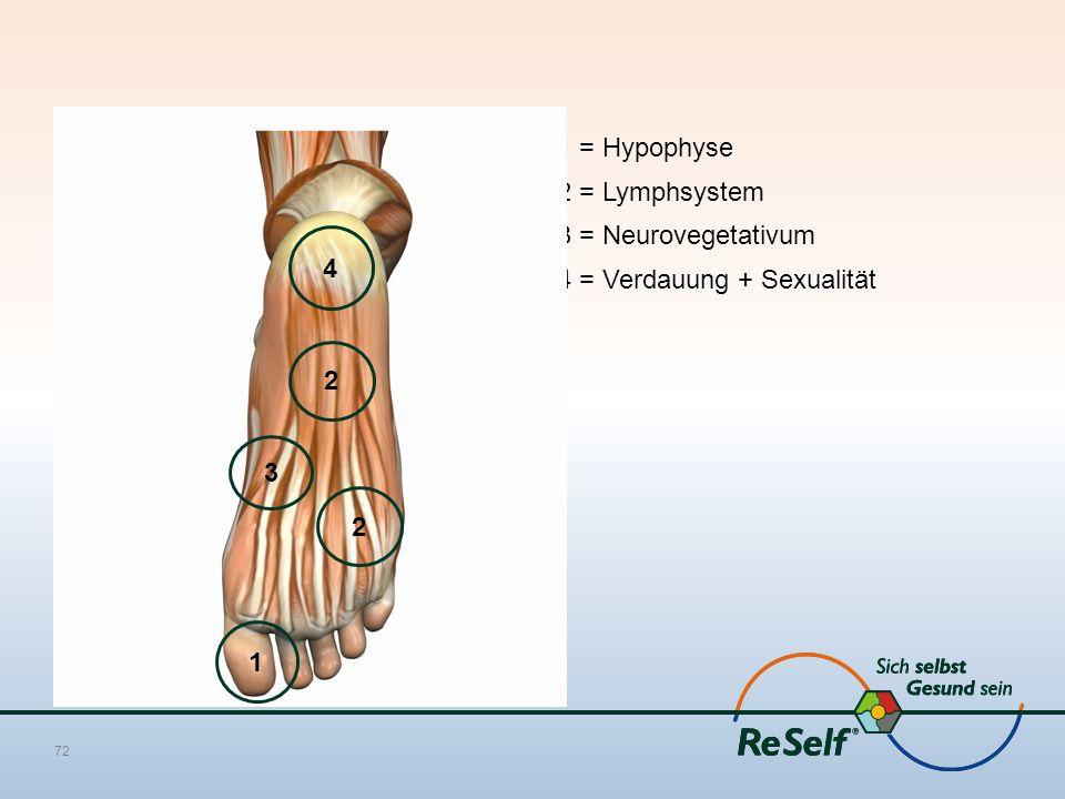 1 = Hypophyse 2 = Lymphsystem 3 = Neurovegetativum 4 = Verdauung + Sexualität